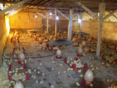 Kandang Ayam Pokphand serba serbi bandung design bild