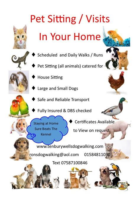 dog house sitters pet sitting and home visit advert tenbury wells dog