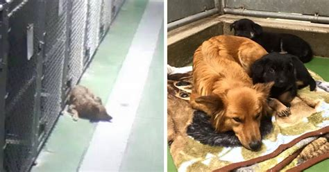 comfort kennels dog breaks out of kennel to comfort abandoned crying