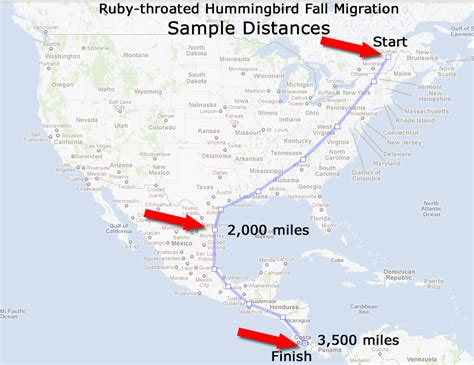 ruby throated hummingbird migration map with sle