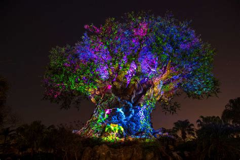tree of life video the tree of life awakens at disney s animal kingdom