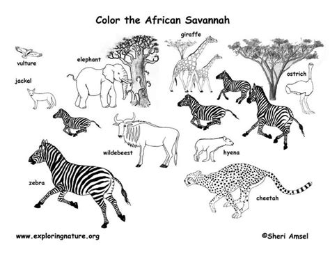 coloring sheets african animals african animals habitat biome savanna colouring page