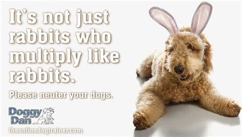 when should i neuter my puppy 6 reasons why you should neuter your the trainer