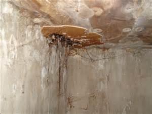 le metier de couvreur moissisures termites humidit 233 danger