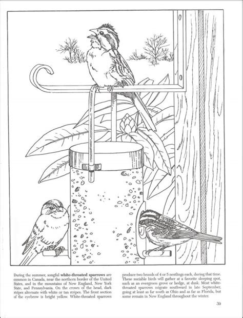 dover coloring books for sale backyard nature coloring book 002717 details rainbow