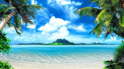 tropical island  palm tree beach youtube