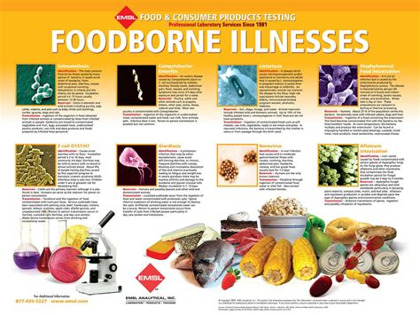printable food poster food borne illness printable poster for the classroom