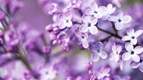 lilac background lilac backgrounds wallpaper cave