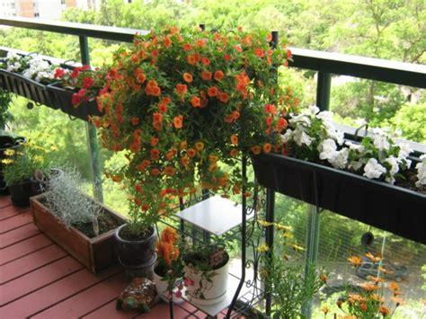 Schöne Balkonpflanzen by Balkonbepflanzung Den Balkon Vor Freude Strahlen Lassen