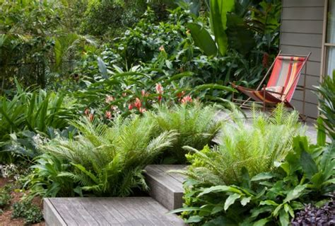 how to create a tropical backyard create your own tropical garden