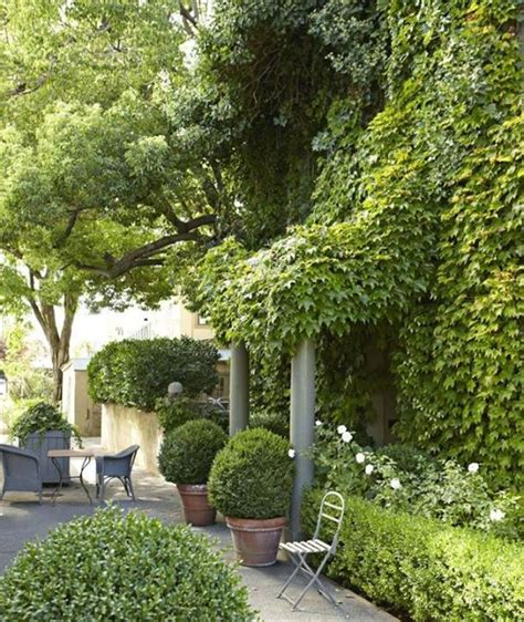 myra hoefer 17 best images about boxwoods in the garden on pinterest