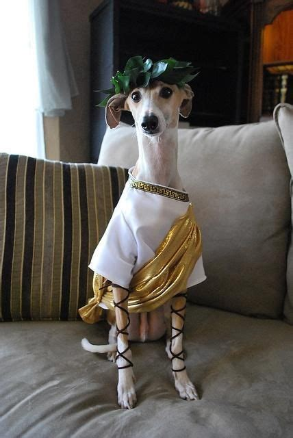 Halloween Costume Ideas For Dogs Homemade