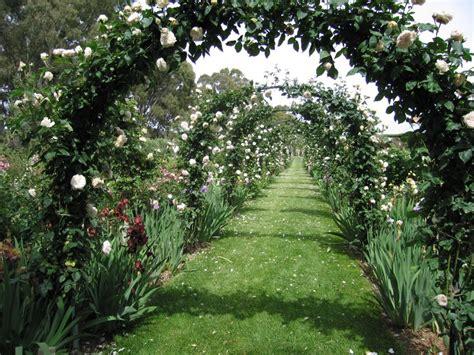 potatura piante da giardino ricanti cura coltivazione e potatura