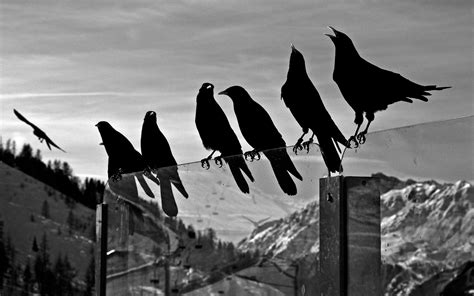 black and white wallpaper with birds black and white bird wallpaper wallpapersafari