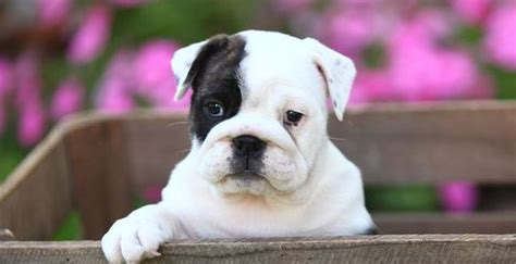 why do puppies your why do dogs cry 3 tips to stop your puppy at