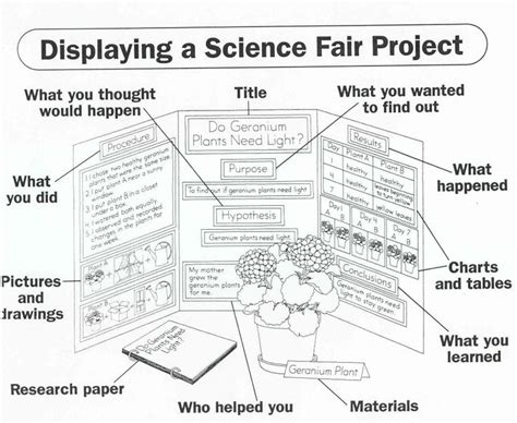 layout for science exhibition 12 best images about tri fold poster boards on pinterest