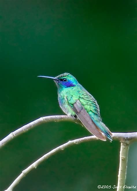 10 000 birds rare hummingbirds in new jersey