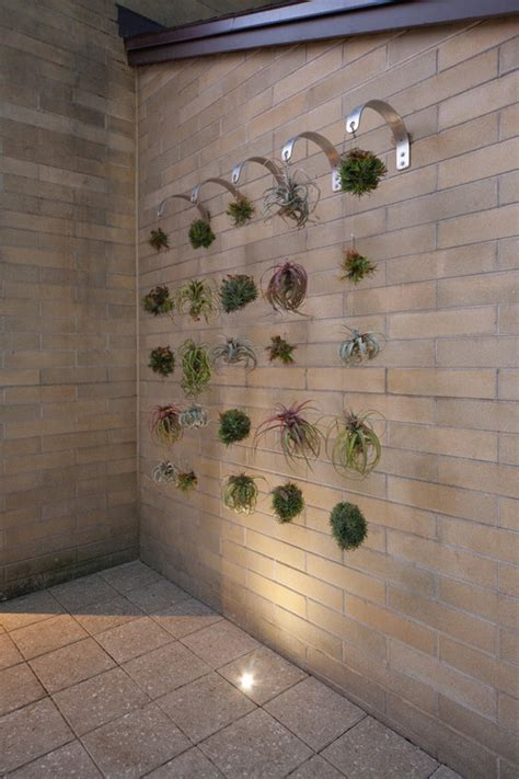 Air Plant Vases Air Plants Where To Buy Air Plants Care Guide Install