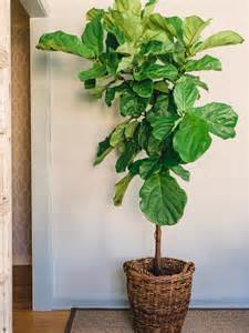 houseplants guide hgtv blog interior office plants part 14