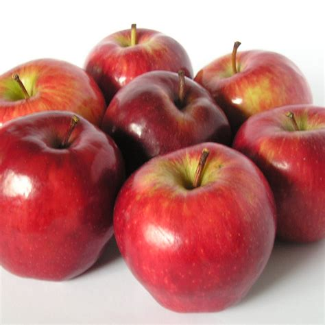 äpfel Alte Sorten 2951 by Apfel Alte Sorten Apfel Ist Nicht Gleich Apfel Das