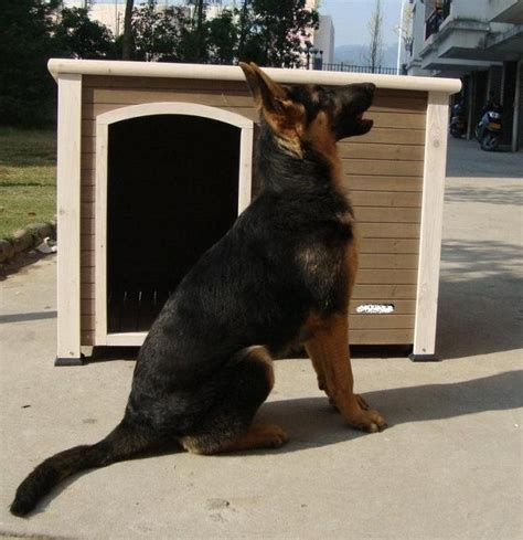 wooden dog houses for sale wooden garden home large dog houses for sale buy wooden dog house dog houses large