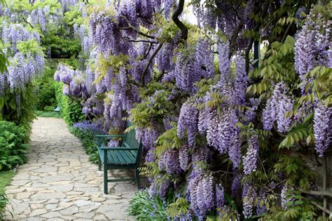 wisteria meaning the secret meaning behind 11 common trees