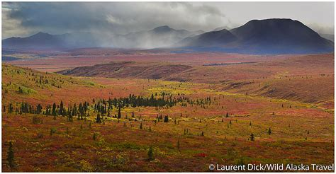 alaska colors peak of the fall colors in denali national park 187 alaska365