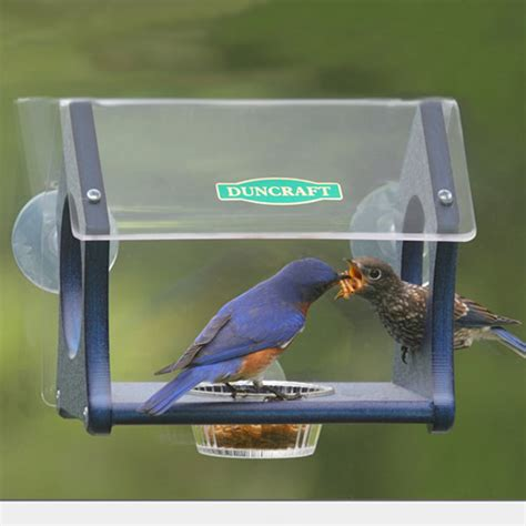 duncraft com duncraft eco fly thru window mealworm feeder