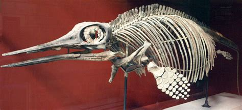 150 Ft In M ophthalmosaurus wikipedia
