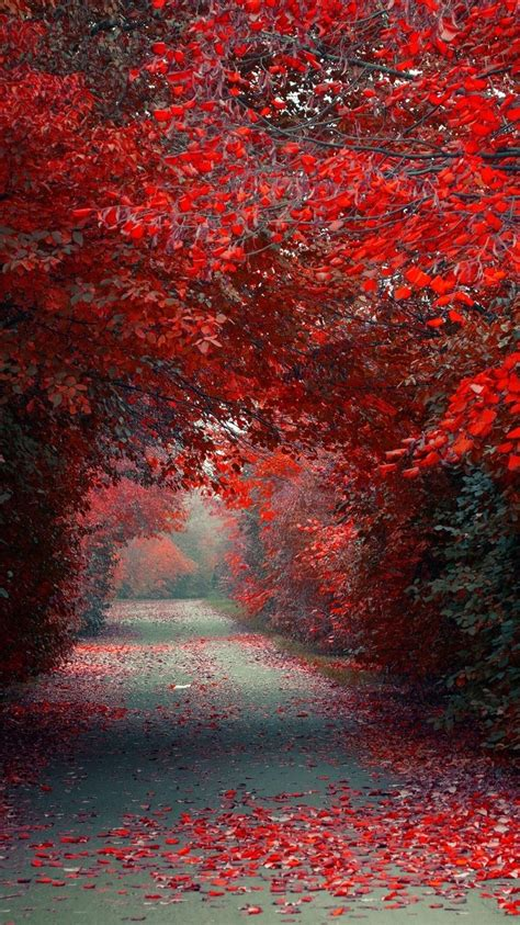autumn red leaves road wallpaper iphone wallpaper iphone
