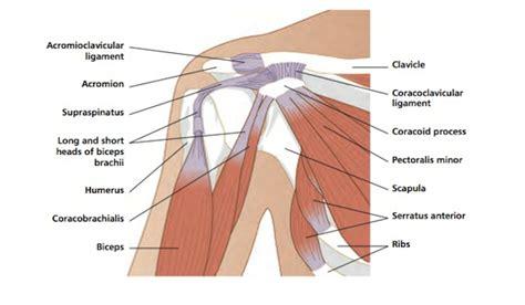diagram of a shoulder shoulder diagram craftbrewswag info