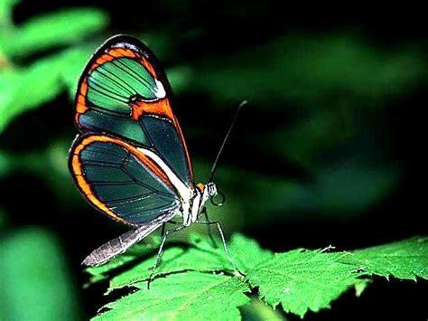 imagenes raras da natureza as borboletas mais bonitas da natureza fotos