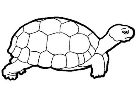baby turtle coloring pages coloring home