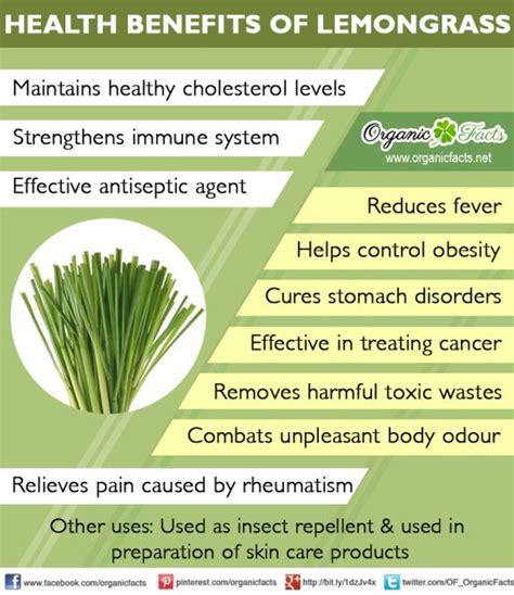 Health Benefits of Lemongrass | Organic Facts Lemongrass Benefits Cancer