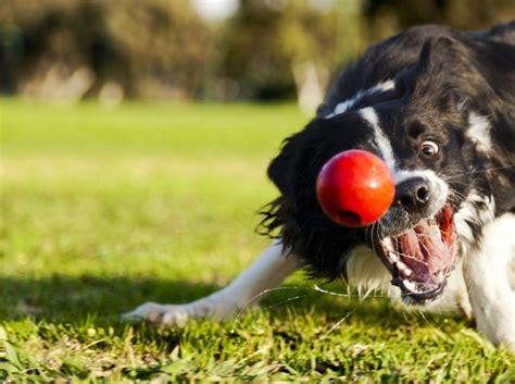fotos animales juegos 11 juegos para la mente del perro eroski consumer