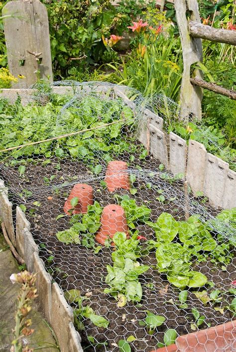 how to keep pests out of vegetable garden 1000 images about garden screening on gardens