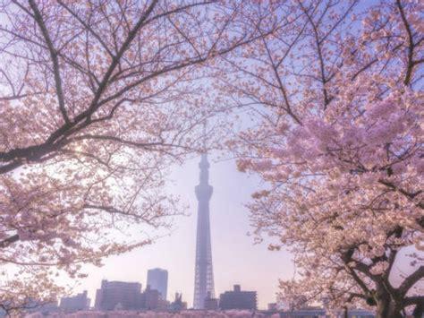 tokyo sakura spots cherry blossom mega guide tokyo