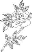 rose bush coloring page duchesse de brabant rose bush coloring page