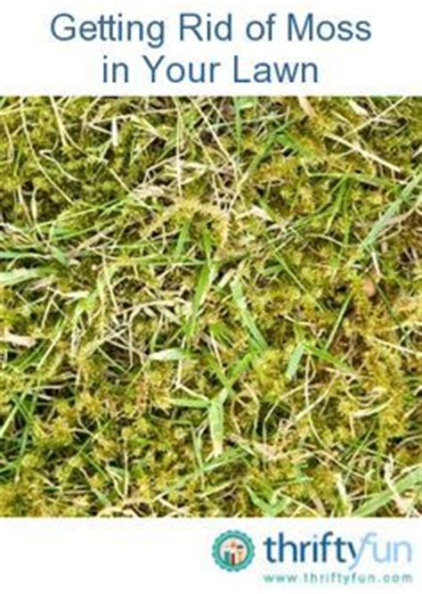 getting rid of moss in your lawn plants green plants and the o jays