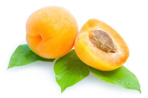 images of fruit apricot fruit photos elsoar