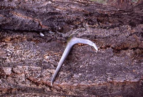 antler wyoming horn