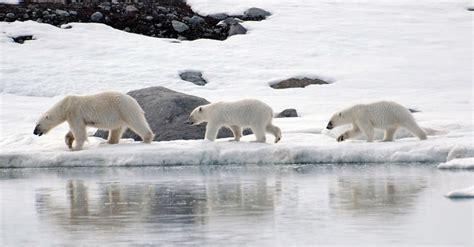 the polar programme