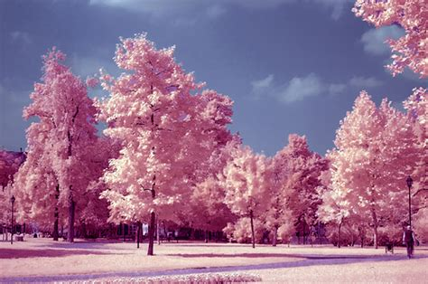 pretty trees beautiful pink pretty sky trees image 91020 on
