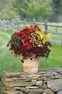 fall plants container gardening pinterest
