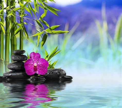 Bilder Mit Steinen Und Blumen by Fotos Spa Natur Orchideen Bambusgew 228 Chse Blumen Wasser Steine