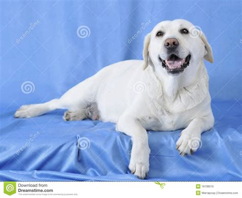 comfortable temperature for dogs comfort dog royalty free stock images image 16138519
