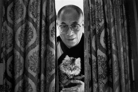 1401943276 the dalai lama s cat and ॐ the dalai lama s cat ॐ st jerome book club pinterest
