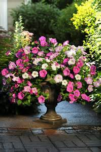 17 best images about easy wave petunias on pinterest