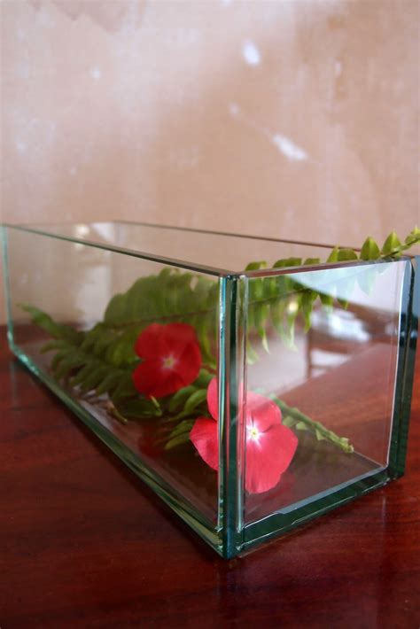 Plate Planter by Thick Glass Plate Planter 12 Quot X4 Quot X4 Quot