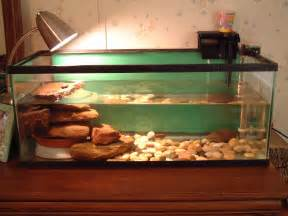 Here is a picture of Wendy's Turtle Tank. You can seethe new baby